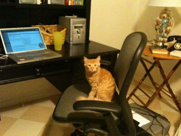 O'Malley, the 3.0 kitteh, at a programmer's desk